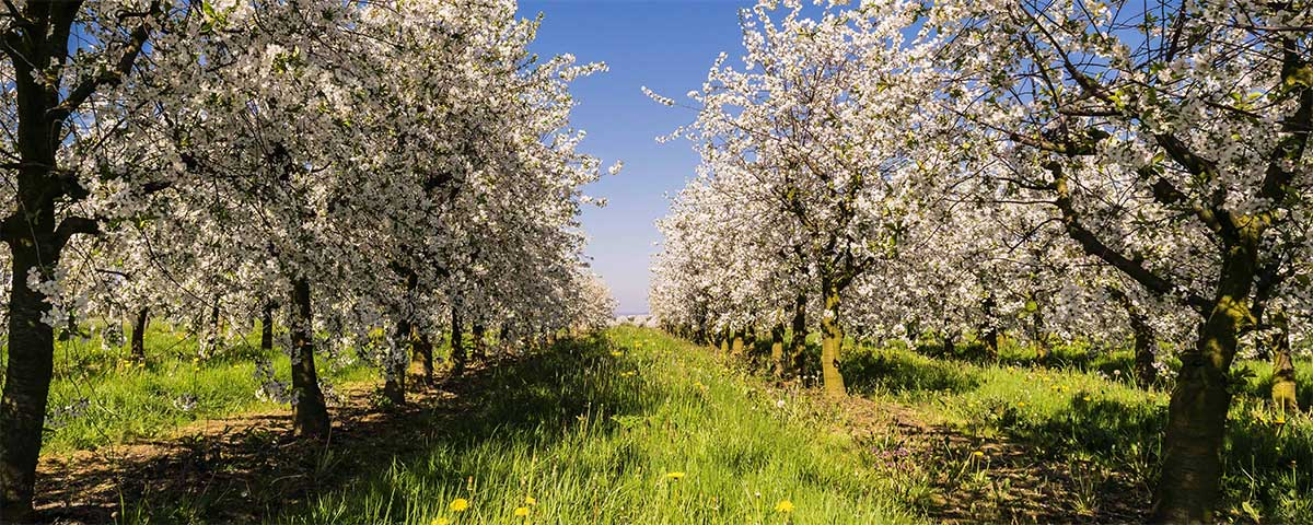 The best Quotes and Sayings about Spring